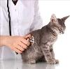 Ветеринарные клиники в Малгобеке